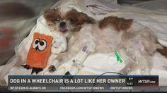 Dog, owner both understand wheelchair struggles