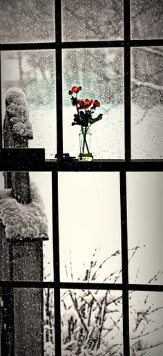 Looking out / winter's soft light