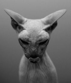. I was born to bring savage horror on to your race of puny humans - just look at my litter box.