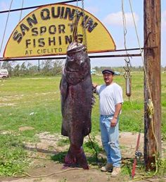 Largest Sea Bass Ever Caught- California | The 10 Biggest Catches In The World