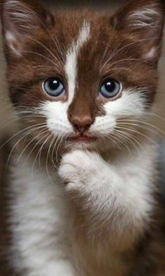 31 photos de chats mignons - Adorable chaton - Photos of cats - [post_tags Pretty Cats, Beautiful Cats, Animals Beautiful, Cute Little Animals, Cute Funny Animals, Cute Cats And Kittens, Kittens Cutest, Cutest Cats Ever, Image Chat