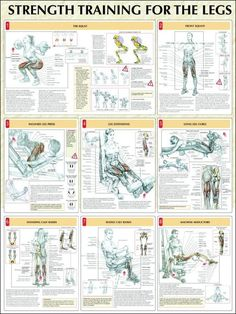 Strength Training for the Legs: squats, front squats, inclined leg press, leg extensions, lying leg curls, standing calf raises, seated calf raises, machine abductors ♦ #health #fitness #exercises #routines #legs #diagrams #body #muscles #gym #bodybuilding: