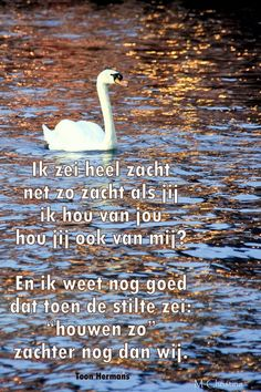 Toon Hermans > ik zei heel zacht Thoughts And Feelings, Proverbs, Cool Words, Slogan, Poems, My Love, Geluk, Image, Nice