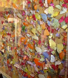 Butterfly wall at Number Sixteen