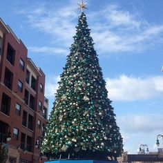 The Christmas tree is up at the Branson Landing.