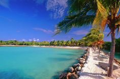 Lagoon with Palm Trees, Renaissance Island, Aruba | Find Picture Perfect Sun | View Deals!