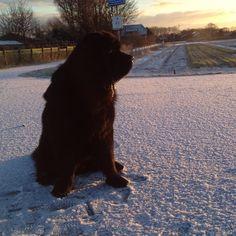 Hitch #newfie #dog #wodolaz #ilovemynewfie #ilovemydog