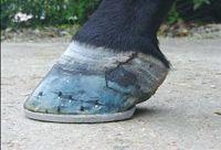Hoof cracks: Finding cause is key to treatment, repair