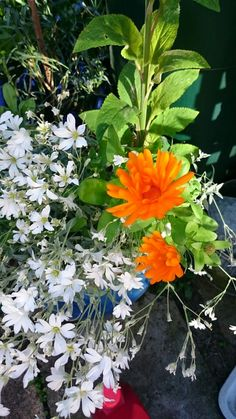 Calendula and Snow in Summer