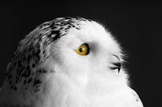 I spy with my yellow eye by Brian Scott on 500px