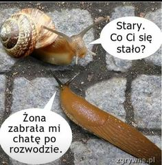 Check out all our Snail Gets Foreclosed On funny pictures here on our site. We update our Snail Gets Foreclosed On funny pictures daily! Funny Animal Pictures, Funny Photos, Cute Pictures, Funny Animals, Animal Pics, Animal Funnies, Really Funny, Funny Cute, The Funny