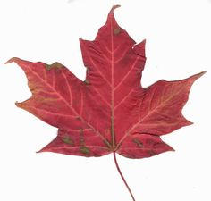Since National Flag Day is February 15th, let's learn about the Canadian Flag!