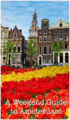 I loved the short trip to Amsterdam I took a few years ago.Tulips and frontages of old buildings in Amsterdam, Netherlands Amsterdam City, Amsterdam Travel, Travel Around The World, Around The Worlds, Weekend City Breaks, Beautiful Places In The World, Champs, Wonders Of The World, Netherlands
