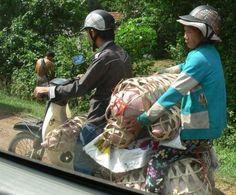 Motorbike Transport Services – Vietnamese Pig Courier from Da Nang to Nha Trang