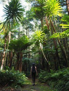 Australia's Best Kept Secret: Why you Must Visit Norfolk Island