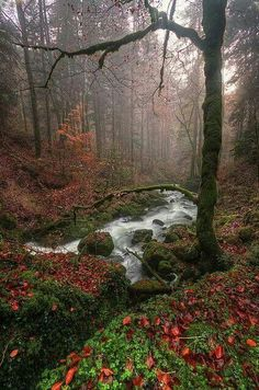 Magic Forest in France