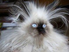Thank You Static Electricity! I Always Wanted To Be The Lion King...