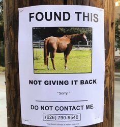 14 Hysterical Flyers Thatll Make You Chuckle And Then Immediately Say WTF - Horses Funny - Funny Horse Meme - - 14 Hysterical Flyers That'll Make You Chuckle And Then Immediately Say 'WTF' Memebase Funny Memes The post 14 Hysterical Flyers Thatll Make You Freaking Hilarious, Funny Fails, Haha Funny, Funny Memes, Lol, Funny Stuff, Hilarious Sayings, 9gag Funny, Funniest Memes
