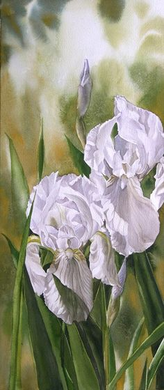 Double white irises by Alfred Ng
