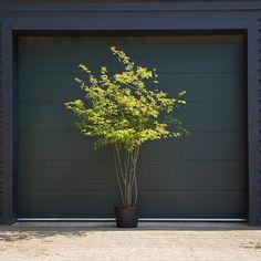 Garden Plants, House Plants, Native Plants, Wild Flowers, Building A House, Lawn, Garden Design, Planters, Home And Garden