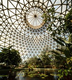 Botanic Gardens of Brisbane. What an exotic place. I can't wait to see some of the wildlife Australia is home to.
