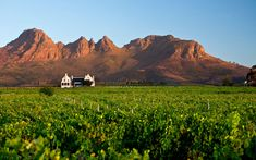 Everyone comes back from South Africa's premier wine area raving about its beauty, starting with the towering mountains that define the landscape. Centered on the university town of Stellenbosch, it's also less than an hour from Cape Town, making the travel as easy (or easier) than going to Napa from San Francisco. The cool climate of the area, influenced by both the Indian and Atlantic Oceans, is ideal for Cabernet Sauvignon, Chenin Blanc, Syrah, and other grapes—and they've been making…