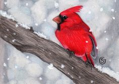 ACEO Red Cardinal Bird Male Snow  Art ORIGINAL  MIxed Media Sherry Goeben #Miniature