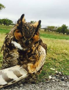 Oklahoma police officer rescues injured owl from interstate, lets it ride shotgun to vet