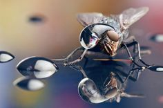 1   Mesmerizing Photos Of Insects Wearing Hats Made Of Water   Co.Design: business + innovation + design