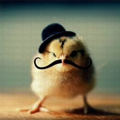 Greeting Card Set Chick in Bowler Hat Mustache by chicksinhats, $14.00