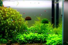 New arrival aquarium Avatar landscaping ADA style floating moss ball
