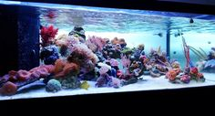 Just the Tip! 36x24x12 45g Reef - Page 3 - Reef Central Online Community