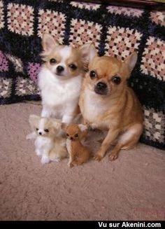 Chiens et leurs sosies en peluche - Dogs and their lookalikes stuffed