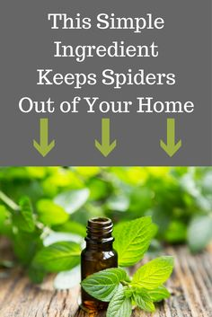 How To Get Rid Of Spiders  Spider Spray Spider And Sprays Best How To Get Rid Of Spiders In Bedroom Inspiration