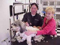 Best Dog Grooming Courses Online