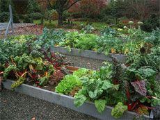 Vegetables That Grow In Shade: How To Grow Vegetables In The Shade