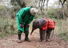 Lasayen, one month old. Please Adopt a baby elephant. These babies have been orphaned by poachers who kill their mothers for their Ivory. The demand for Ivory is greatest in China. Please support The David Sheldrick Wildlife Trust *~❤•❦•:*´`*:•❦•❤~* Click to visit site.