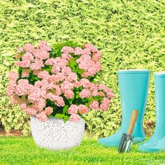 Pflanzengefäss / Plant pot / gardening Potted Plants, Home Decor Inspiration, Garden Pots, Gardening, Plant Pots, Pot Plants, Garden Planters, Garden Container, Lawn And Garden