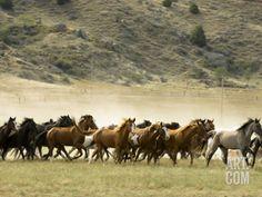 Black Hills Wild Horse Sanctuary, S.D