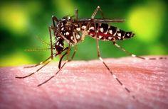Virus Zika, primi casi di infezione in India. Il Ministero della Salute italiano allerta le persone che viaggiano in zone ad alto rischio, in particolare le donne in gravidanza.