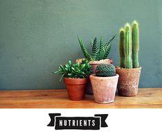 4-cactus-care