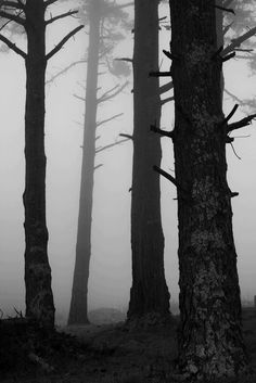 Black and White Forest -