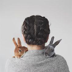 Hair braids and two very photogenic Rex Rabbits // Orange Rex Rabbit // Blue Rex Rabbit Rex Rabbit, House Rabbit, Animals And Pets, Baby Animals, Cute Animals, Kawaii, Potnia Theron, Animal Original, Rabbit Behavior