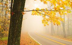 Foggy morning on Route 33 near Skyline Drive, Virginia. Pat & Chuck Blackley photo. country-magazine.com