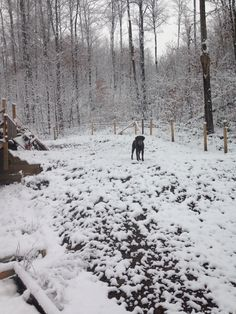 Hershey's first full winter begins today at the Homestead, (2014).