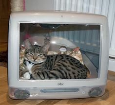 Creative ideas to recycle your Apple iMac - Cat basket iMac