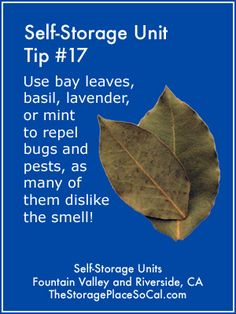 Use bay leaves basil lavender or mint to repel bugs an Understairs Storage basil bay bugs lavender leaves mint repel TSPSelfStorageTip Bathroom Storage Solutions, Small Bathroom Storage, Attic Storage, Desk Storage, Smart Storage, Cube Storage, Kitchen Storage, Foyers, Self Storage Units