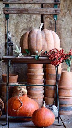 Garden Theme, Autumn Garden, Terracotta Pots, Fall Recipes, Pumpkin Spice, Autumn Leaves, Fall Decor, Falling Leaves, Terra Cotta