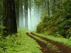 finland forest (metsä) way Forest Path, Redwood Forest, Forest Road, Forest Trail, Misty Forest, Oregon Forest, Fern Forest, Evergreen Forest, Foggy Forest