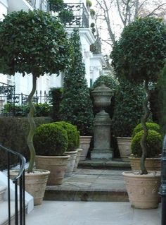 www.eyefordesignlfd.blogspot.com Decorating With Topiary.....For Your Home And Gardens